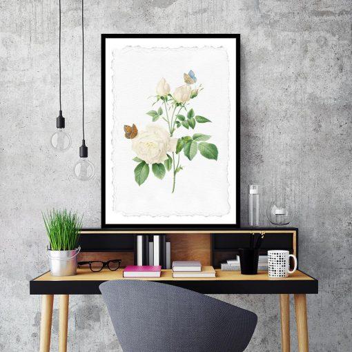 plakat biała róża motyle