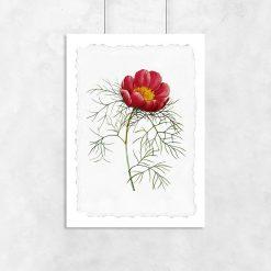 czerwony kwiat na plakacie