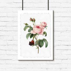 plakat róża i motyl
