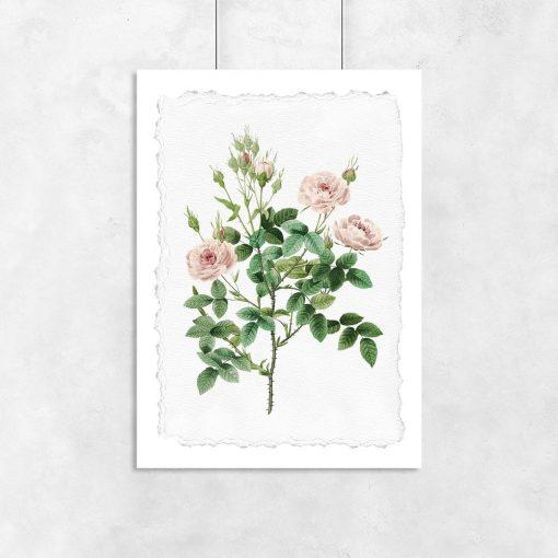 plakat w różowe róże