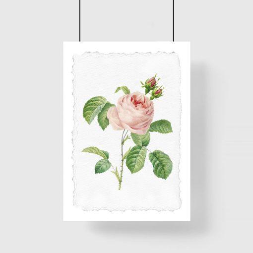 plakat w różę z liśćmi
