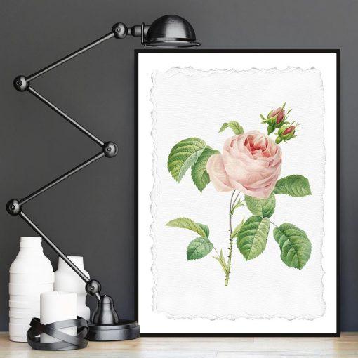 plakat w różową różę
