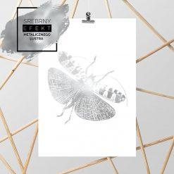 srebrny plakat z motylem