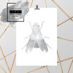 plakat na ścianę z muchą