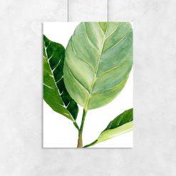 plakat roślina