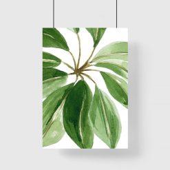 plakat botaniczny
