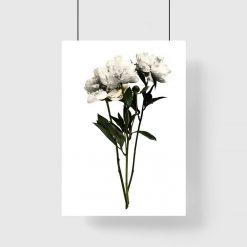 białe kwiaty na plakacie do salonu