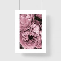 Plakat z fioletową piwonią