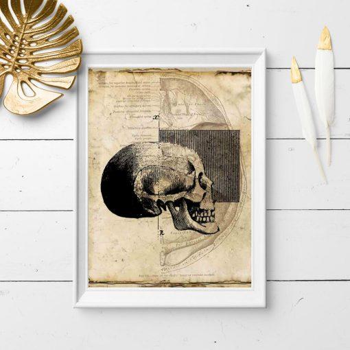 Plakat - Czaszka dla fizjoterapeuty