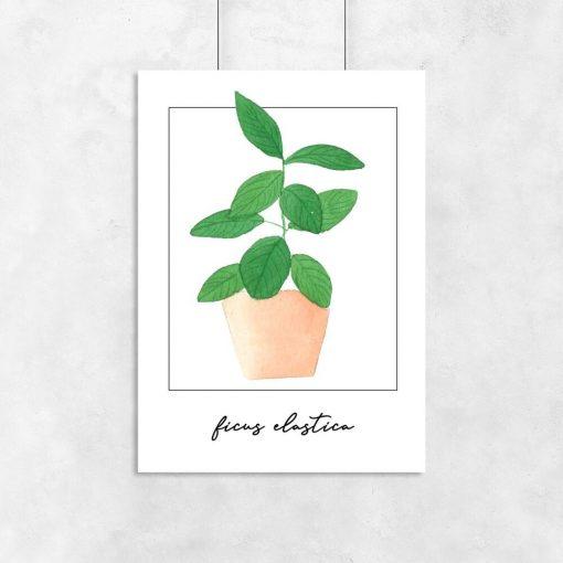 Plakat z figowcem do salonu