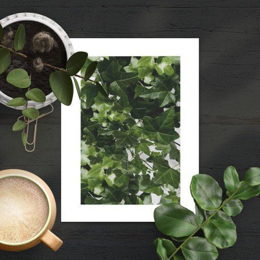 Plakat z zielonym pnączem
