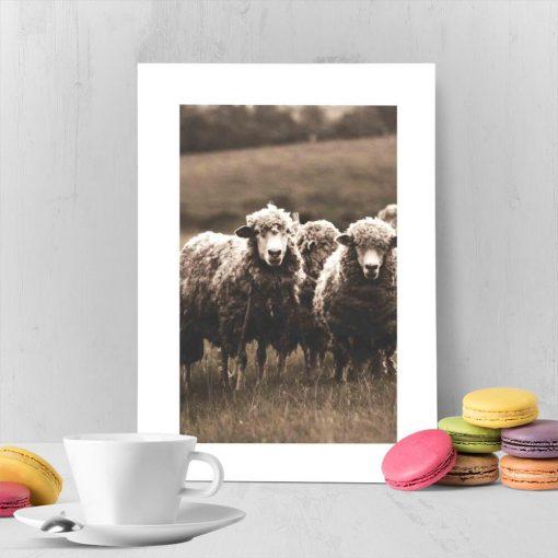 urocze owieczki na plakacie z białą ramą