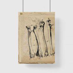 Plakat - Kości dla fizjoterapeuty