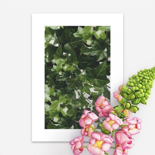 Plakat pnączem w kolorze zielonym