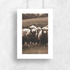 skandynawski plakat z owieczkami