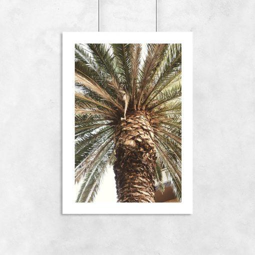Plakat do pokoju - Motyw egzotycznej palmy