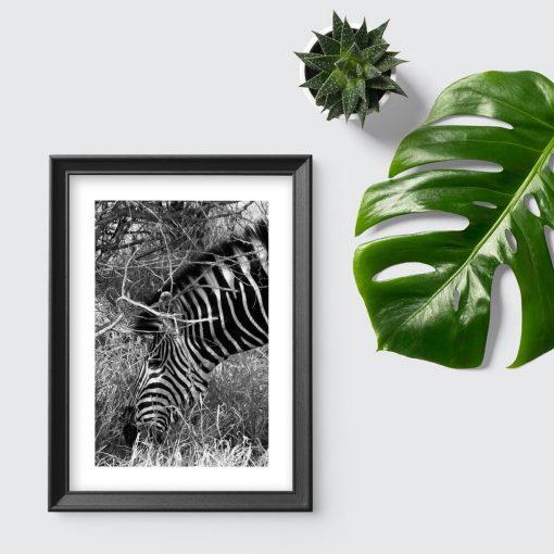 Plakat z zebrą do przedpokoju