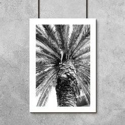 Plakat z palmą do pokoju