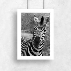 Plakat z zebrą pręgowaną do pokoju