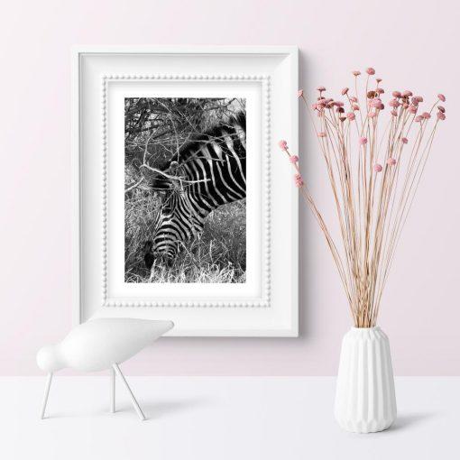 Plakat z zebrą do salonu