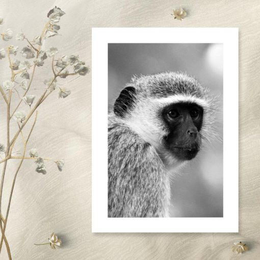 Plakat z małpą do salonu