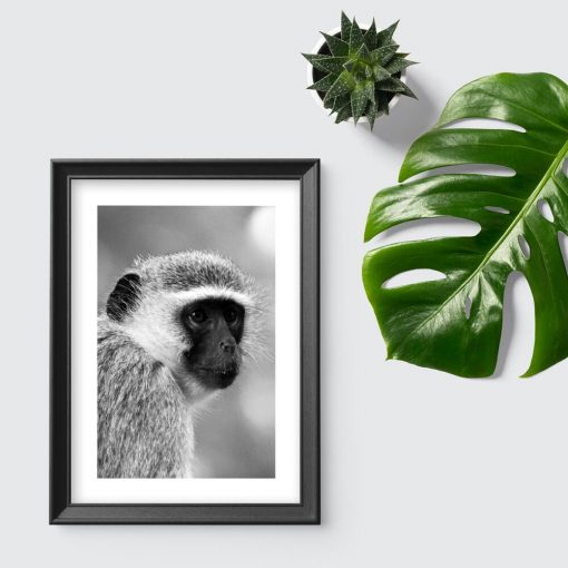 Plakat z małpą do przedpokoju