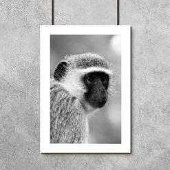 Plakat z małpą do pokoju