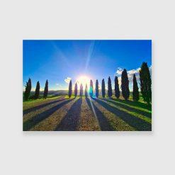 Obraz z cyprysami z promieniach słońca