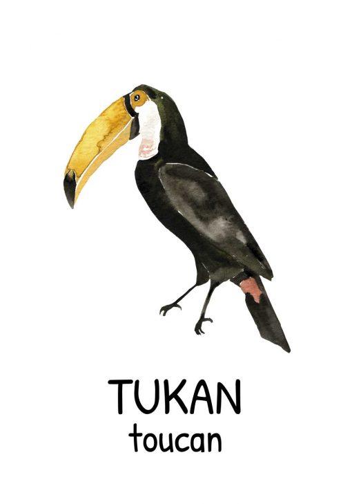 Plakat edukacyjny - Tukan