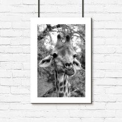Plakat z żyrafą w szarościach
