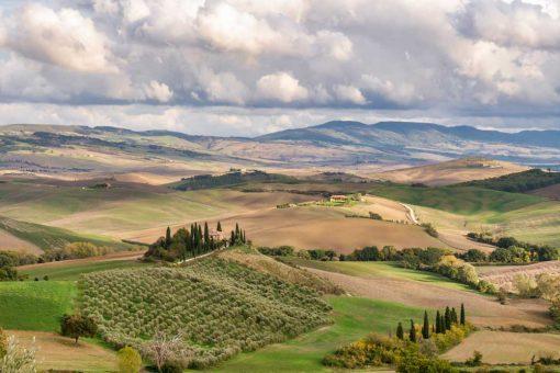 Tapeta z winnicą we Włoszech