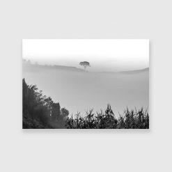 Obraz drzewo we mgle