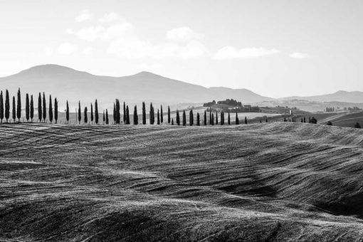 Czarno-biały obraz z motywem pola i drzew na prezent