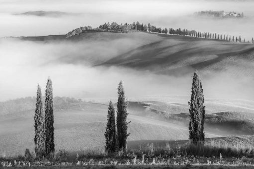 Obraz z motywem mgły