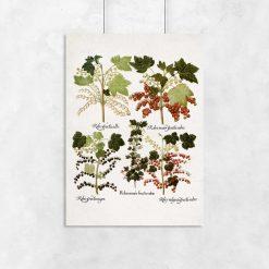 Botaniczny plakat boho z porzeczkami do biura