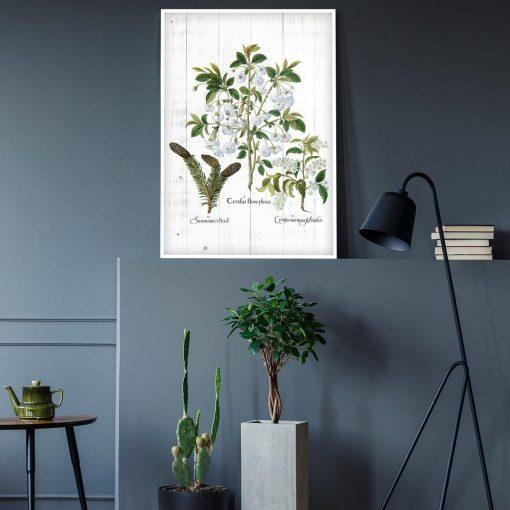 Botaniczny plakat z szyszką do gabinetu