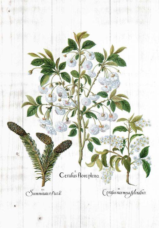 Botaniczny plakat z szyszką do kuchni