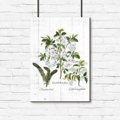 Botaniczny plakat z szyszką do przedpokoju