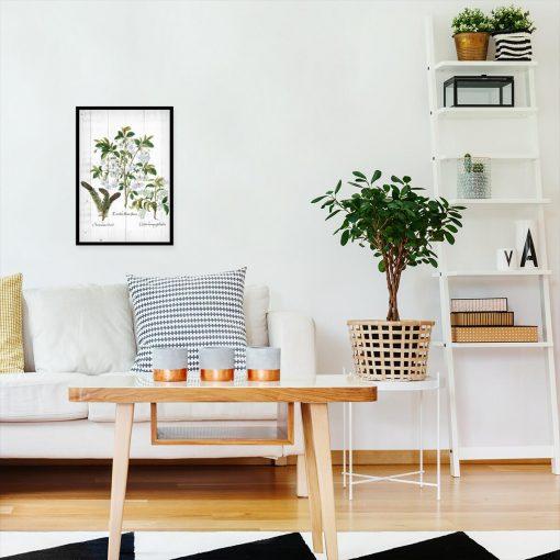Botaniczny plakat z szyszką do salonu