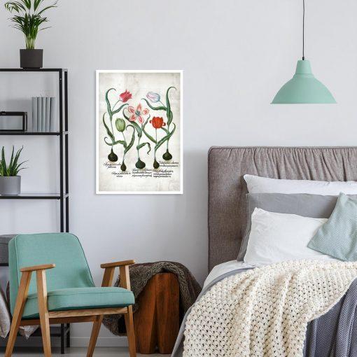 Czerwone tulipany - Plakat dla botanika do pokoju
