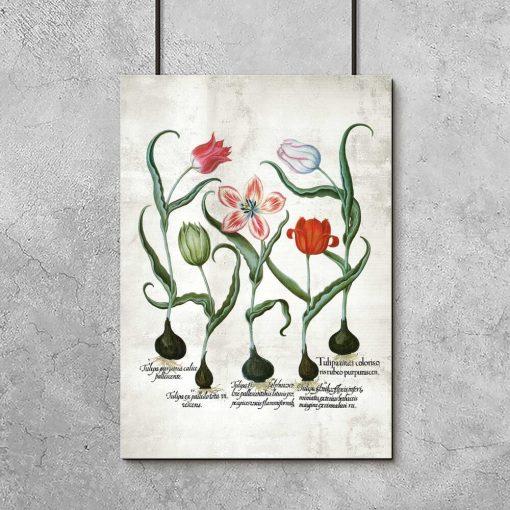 Czerwone tulipany - Plakat dla botanika do przedpokoju