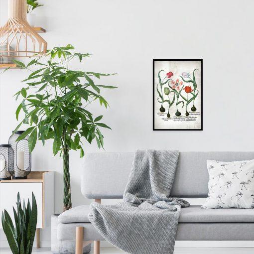 Czerwone tulipany - Plakat dla botanika do salonu