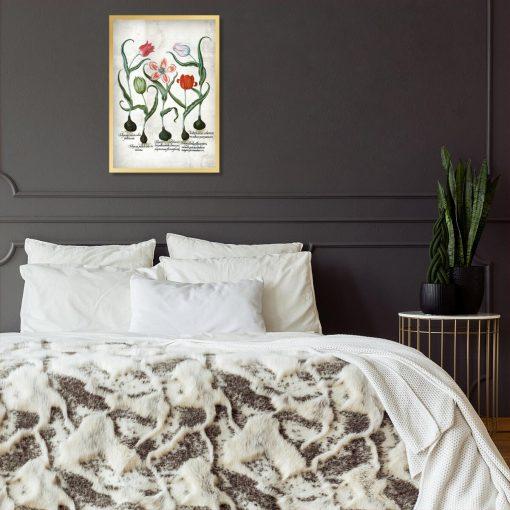 Czerwone tulipany - Plakat dla botanika do sypialni