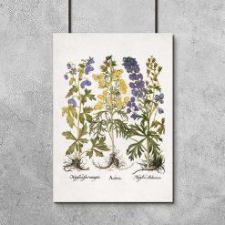 Edukacyjny plakat botaniczny - Tojad mocny do biura