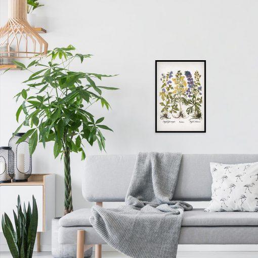 Edukacyjny plakat botaniczny - Tojad mocny do salonu