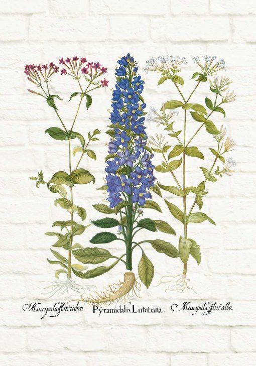 Edukacyjny plakat botaniczny z motywem polnych kwiatów do jadalni
