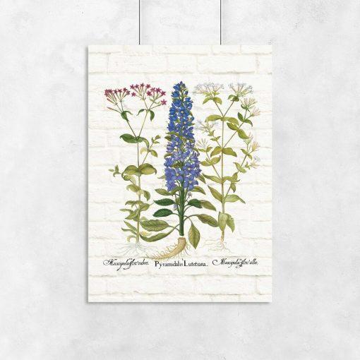 Edukacyjny plakat botaniczny z motywem polnych kwiatów do przedpokoju