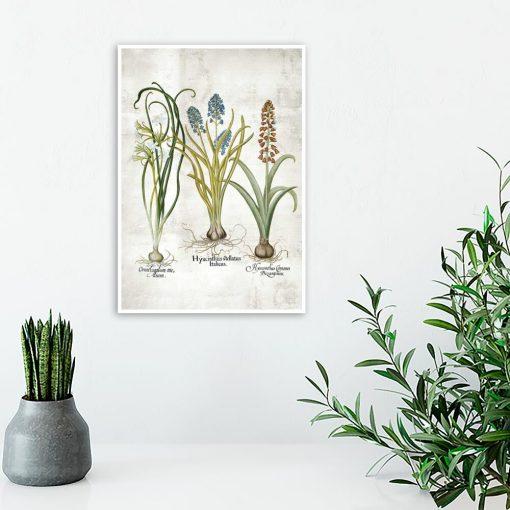 Edukacyjny plakat botaniczny z narcyzem do gabinetu