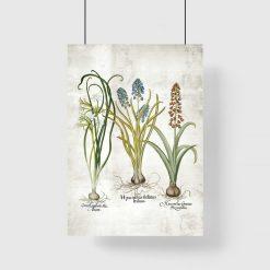 Edukacyjny plakat botaniczny z narcyzem na przedpokój