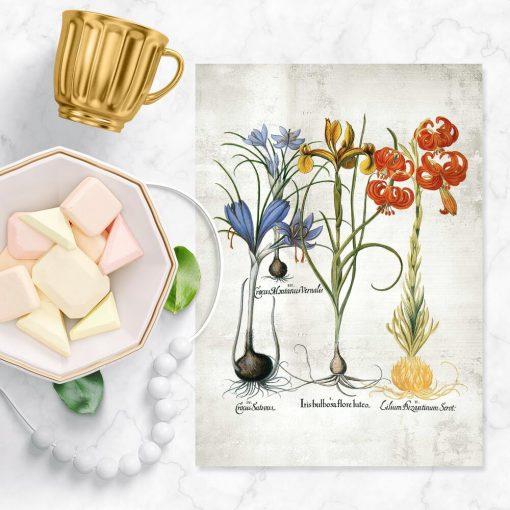 Kolorowy plakat z motywem kwiatowym do nauki botaniki